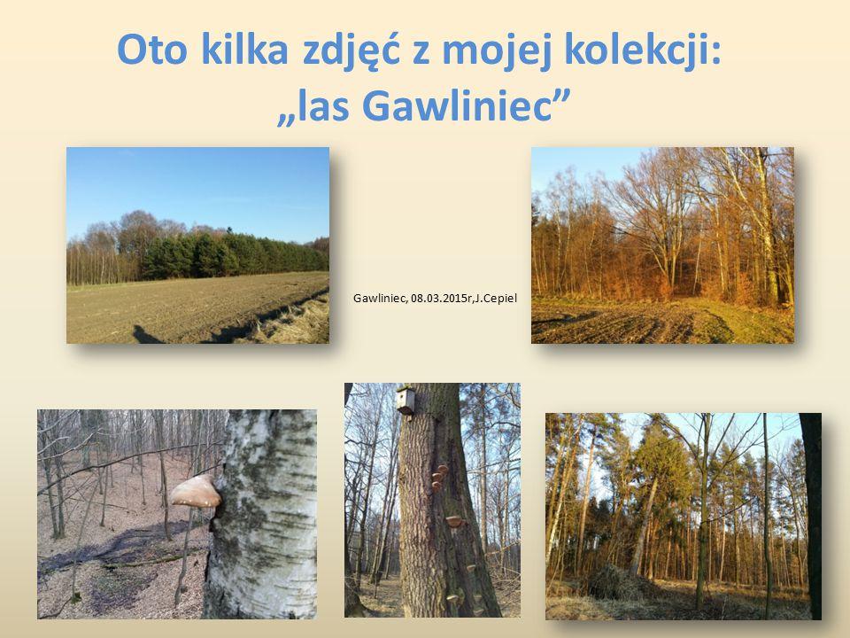 """Oto kilka zdjęć z mojej kolekcji: """"las Gawliniec"""" Gawliniec, 08.03.2015r,J.Cepiel"""