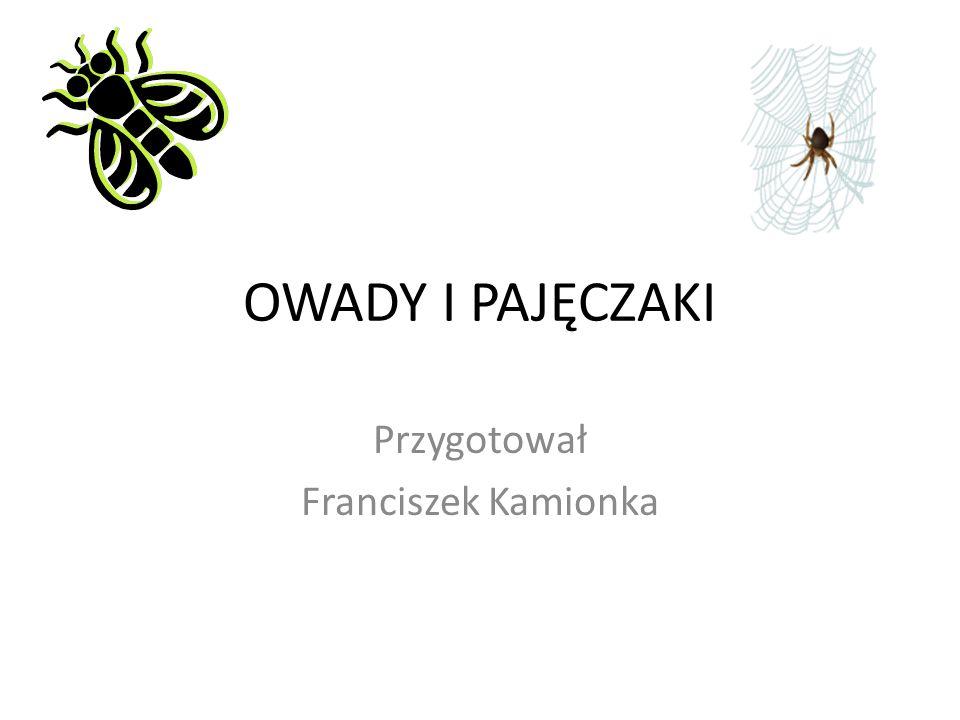 OWADY I PAJĘCZAKI Przygotował Franciszek Kamionka