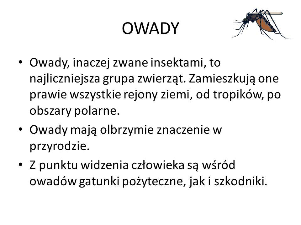 OWADY Owady, inaczej zwane insektami, to najliczniejsza grupa zwierząt.