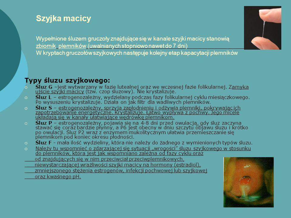 Szyjka macicy Wypełnione śluzem gruczoły znajdujące się w kanale szyjki macicy stanowią zbiornik plemników (uwalnianych stopniowo nawet do 7 dni) W kryptach gruczołów szyjkowych następuje kolejny etap kapacytacji plemników Typy śluzu szyjkowego:  Śluz G –jest wytwarzany w fazie lutealnej oraz we wczesnej fazie folikularnej.