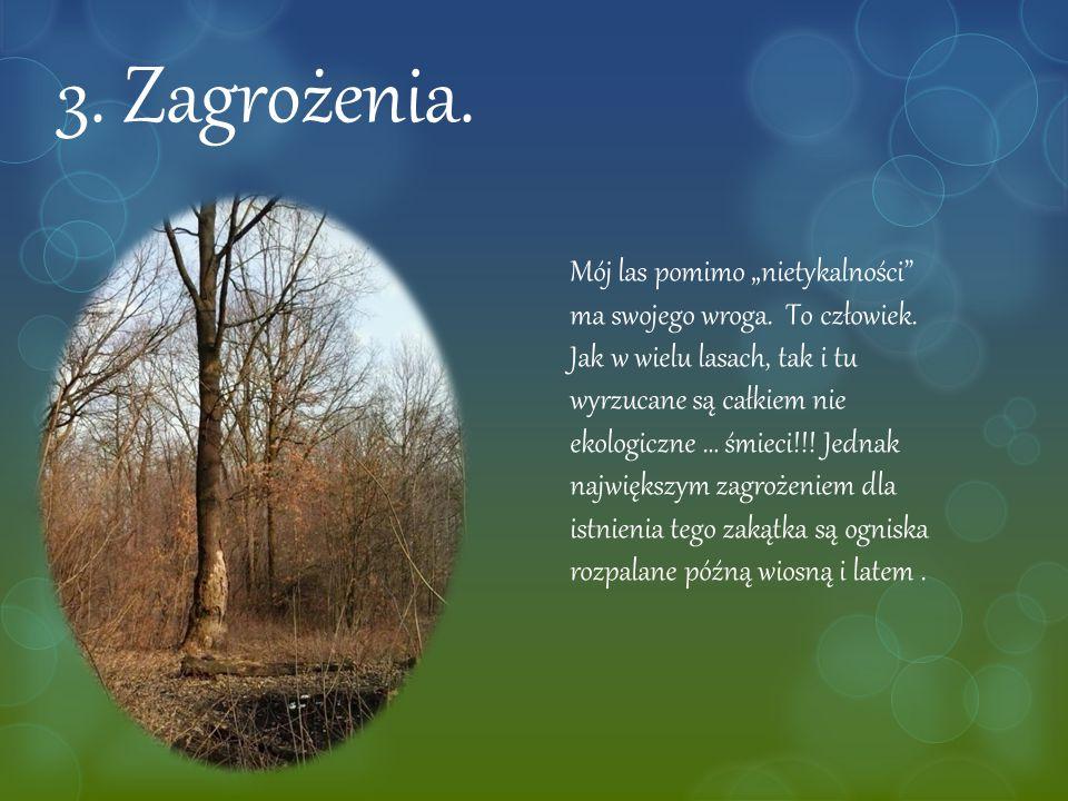 """3. Zagrożenia. Mój las pomimo """"nietykalności"""" ma swojego wroga. To człowiek. Jak w wielu lasach, tak i tu wyrzucane są całkiem nie ekologiczne … śmiec"""