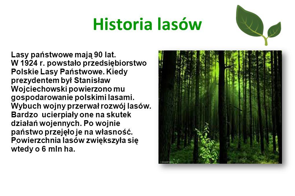 Historia lasów Lasy państwowe mają 90 lat. W 1924 r. powstało przedsiębiorstwo Polskie Lasy Państwowe. Kiedy prezydentem był Stanisław Wojciechowski p