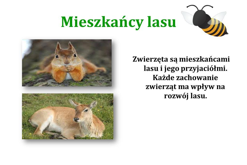 Mieszkańcy lasu Zwierzęta są mieszkańcami lasu i jego przyjaciółmi. Każde zachowanie zwierząt ma wpływ na rozwój lasu.