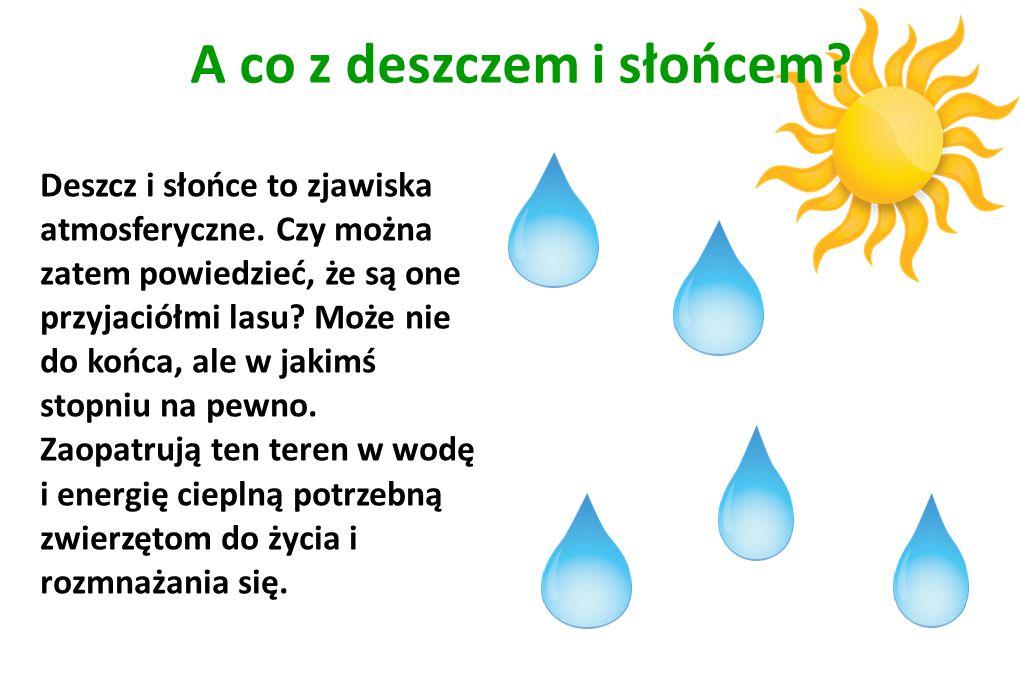 A co z deszczem i słońcem? Deszcz i słońce to zjawiska atmosferyczne. Czy można zatem powiedzieć, że są one przyjaciółmi lasu? Może nie do końca, ale