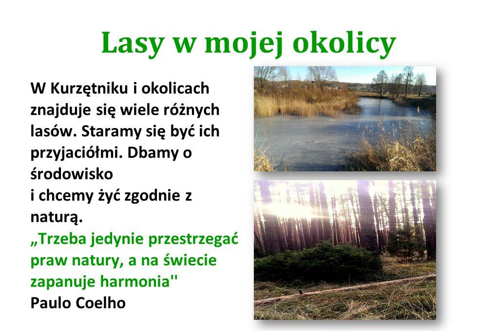 Lasy w mojej okolicy W Kurzętniku i okolicach znajduje się wiele różnych lasów. Staramy się być ich przyjaciółmi. Dbamy o środowisko i chcemy żyć zgod