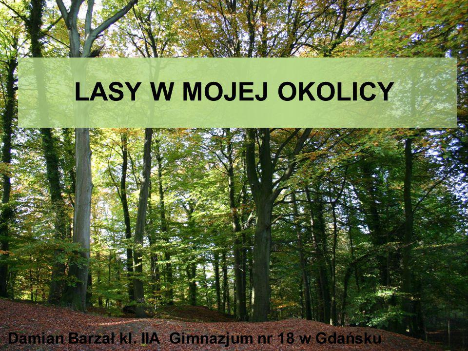LASY W MOJEJ OKOLICY Damian Barzał kl. IIA Gimnazjum nr 18 w Gdańsku