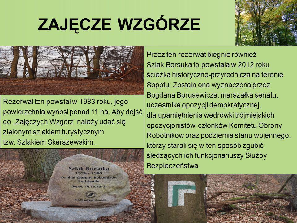 """Rezerwat ten powstał w 1983 roku, jego powierzchnia wynosi ponad 11 ha. Aby dojść do """"Zajęczych Wzgórz"""" należy udać się zielonym szlakiem turystycznym"""