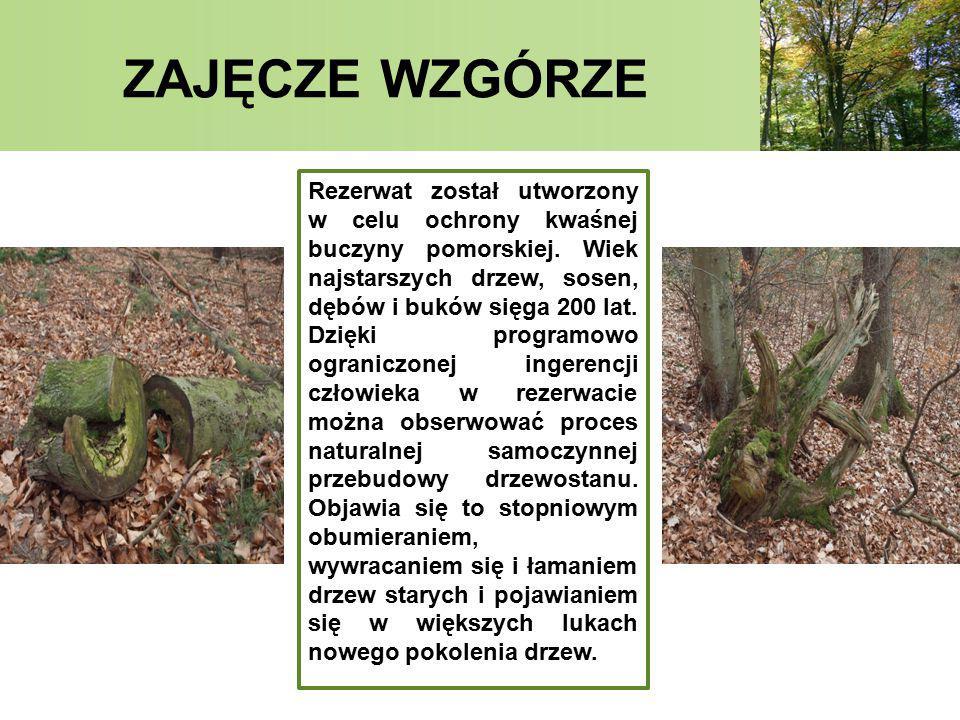 ZAJĘCZE WZGÓRZE Na terenie rezerwatu stwierdzono 175 gatunków roślin naczyniowych, w tym 137 lokalnie rodzimych.