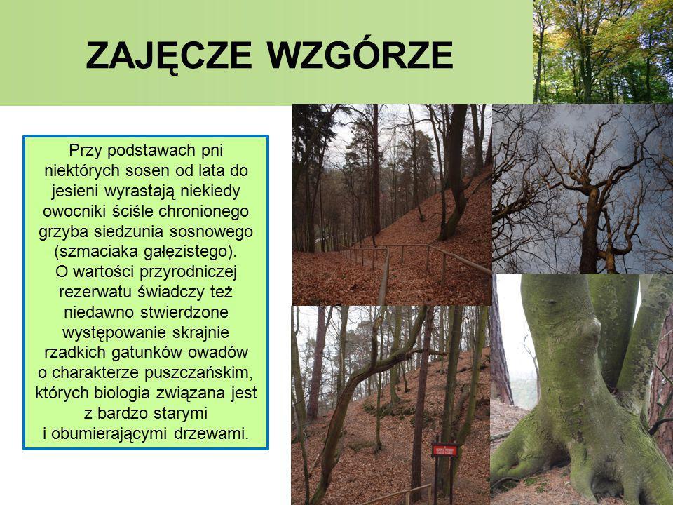 ZAJĘCZE WZGÓRZE PANORAMA Z PUNKTU WIDOKOWEGO W tym rezerwacie znajduje się punkt widokowy na wysokości 120 m.