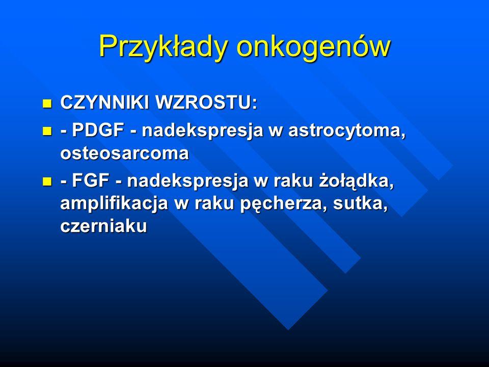 Przykłady onkogenów CZYNNIKI WZROSTU: CZYNNIKI WZROSTU: - PDGF - nadekspresja w astrocytoma, osteosarcoma - PDGF - nadekspresja w astrocytoma, osteosa