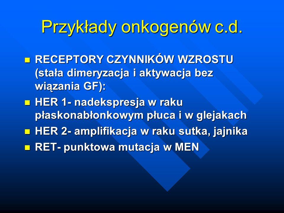Przykłady onkogenów c.d. RECEPTORY CZYNNIKÓW WZROSTU (stała dimeryzacja i aktywacja bez wiązania GF): RECEPTORY CZYNNIKÓW WZROSTU (stała dimeryzacja i