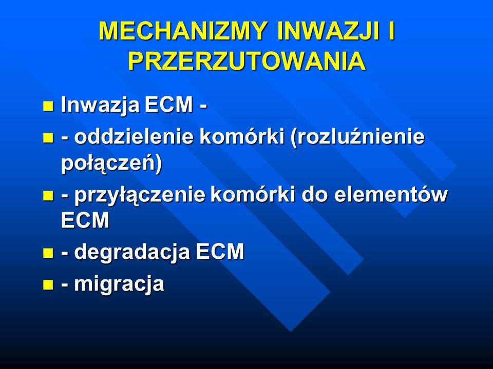 MECHANIZMY INWAZJI I PRZERZUTOWANIA Inwazja ECM - Inwazja ECM - - oddzielenie komórki (rozluźnienie połączeń) - oddzielenie komórki (rozluźnienie połą