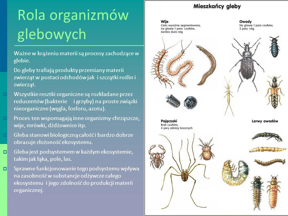 Rola organizmów glebowych  Ważne w krążeniu materii są procesy zachodzące w glebie.