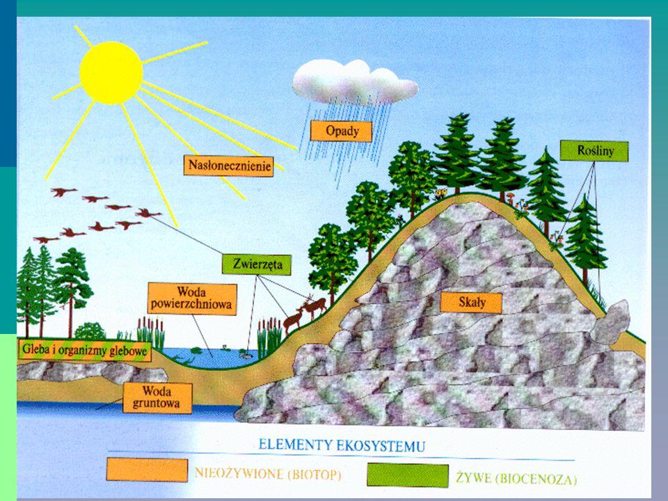 Przepływ energii przez ekosystem