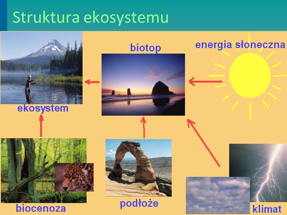 Biotop Biotop to czynniki przyrody nieożywionej:  energia słoneczna,  atmosfera,  czynniki klimatyczne,  ukształtowanie terenu,  rodzaj podłoża Każdy biotop charakteryzuje się:  odmiennymi warunkami klimatycznymi,  inaczej ukształtowanym terenem,  innym rodzajem podłoża,  zróżnicowanymi źródłami związków organicznych i nieorganicznych.