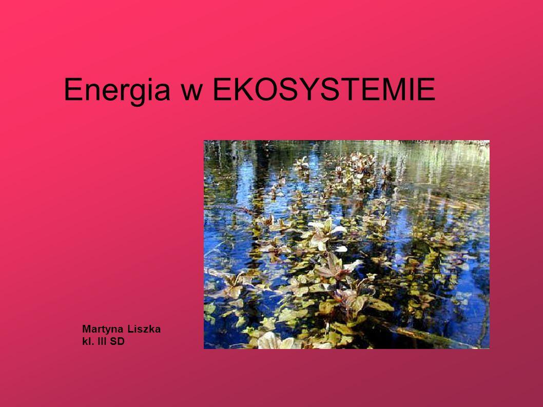 Co to Ekosystem .