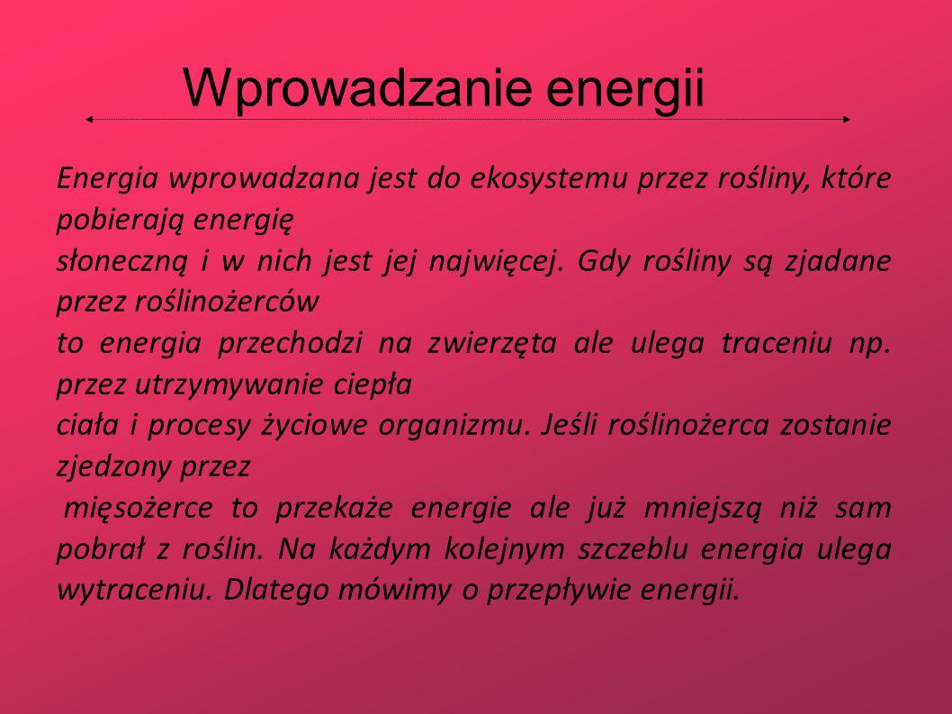 Energia wprowadzana jest do ekosystemu przez rośliny, które pobierają energię słoneczną i w nich jest jej najwięcej. Gdy rośliny są zjadane przez rośl