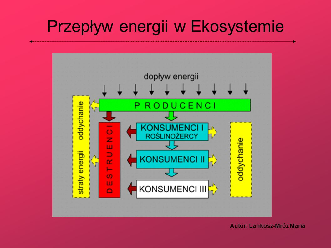 Przepływ energii w Ekosystemie Autor: Lankosz-Mróz Maria