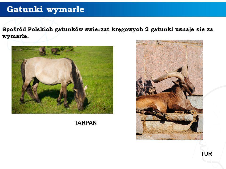 Gatunki wymarłe 13 Spośród Polskich gatunków zwierząt kręgowych 2 gatunki uznaje się za wymarłe. TUR TARPAN