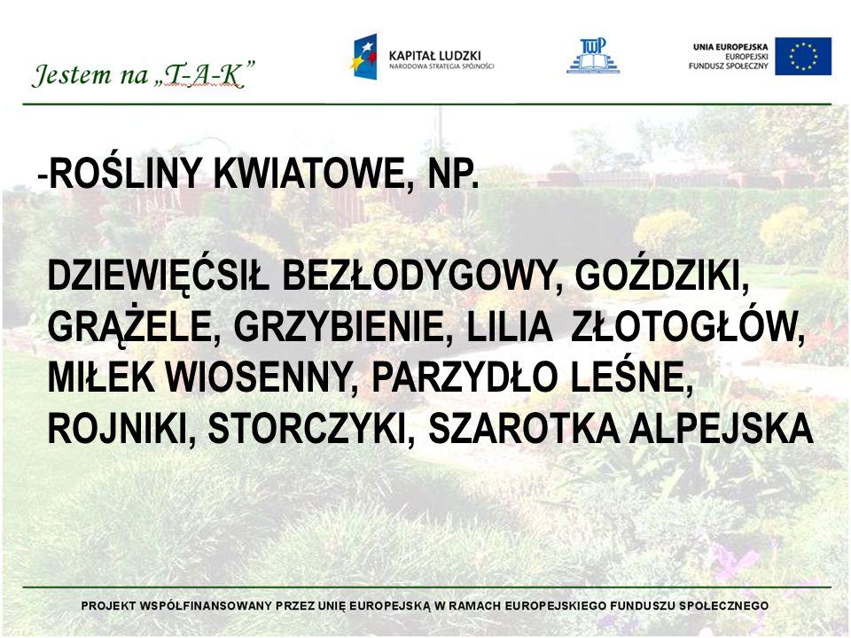 - ROŚLINY KWIATOWE, NP.