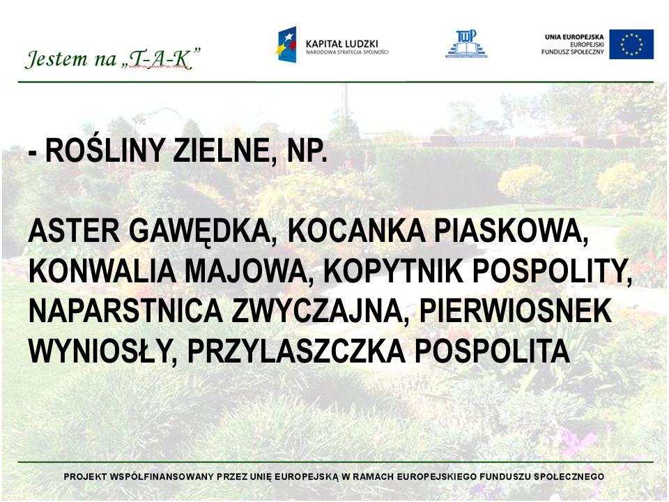- ROŚLINY ZIELNE, NP.