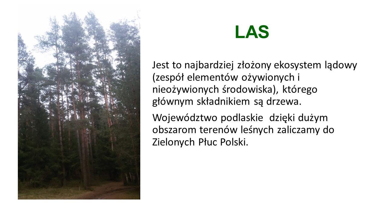 LAS Jest to najbardziej złożony ekosystem lądowy (zespół elementów ożywionych i nieożywionych środowiska), którego głównym składnikiem są drzewa.