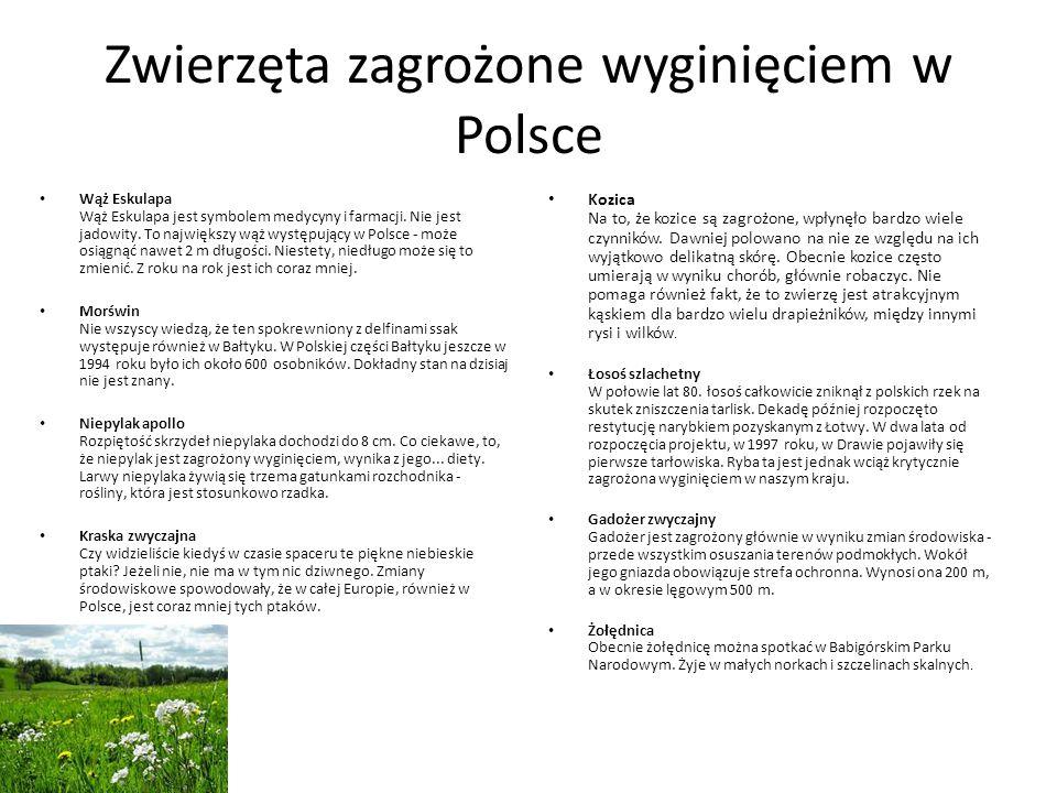 Zwierzęta zagrożone wyginięciem w Polsce Wąż Eskulapa Wąż Eskulapa jest symbolem medycyny i farmacji. Nie jest jadowity. To największy wąż występujący