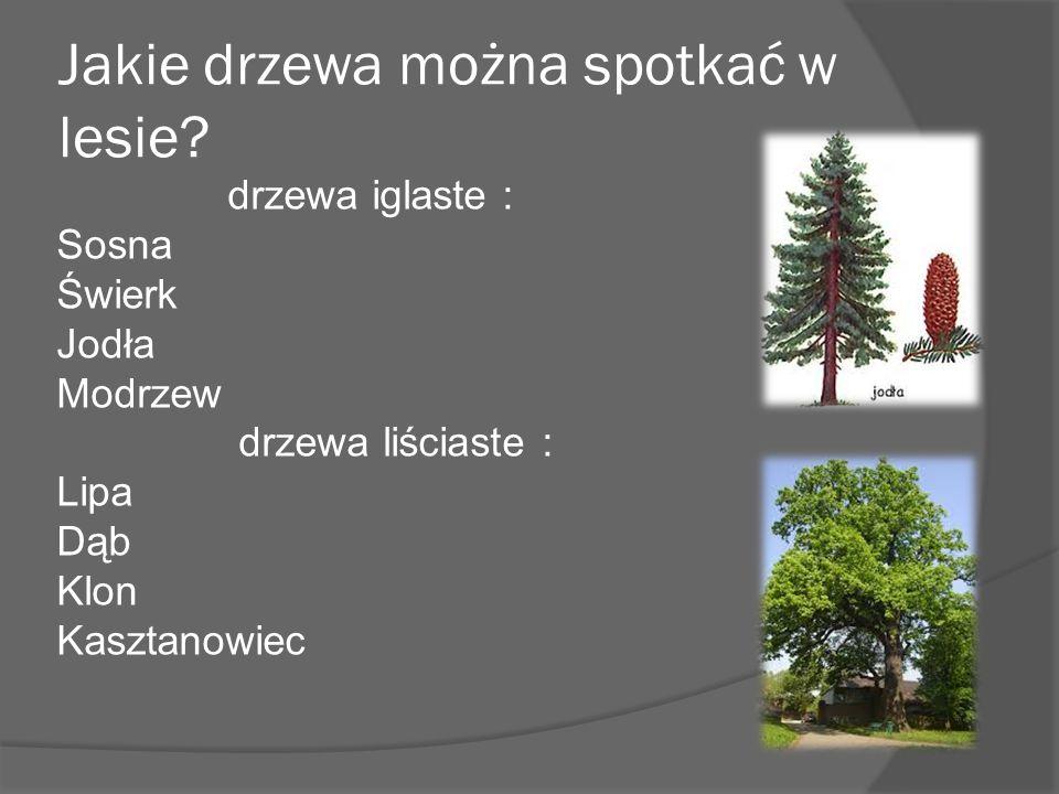 Jakie drzewa można spotkać w lesie.