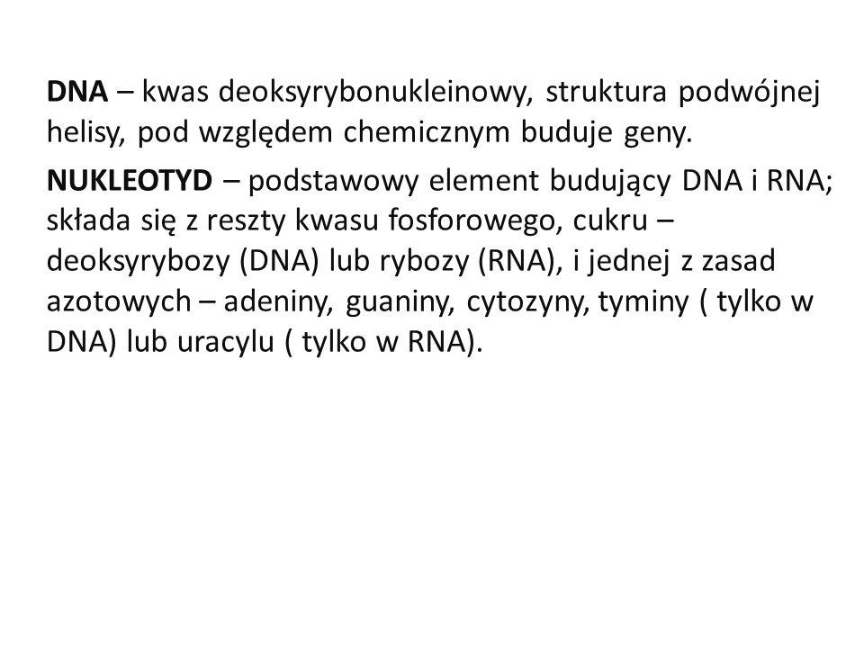 DNA – kwas deoksyrybonukleinowy, struktura podwójnej helisy, pod względem chemicznym buduje geny. NUKLEOTYD – podstawowy element budujący DNA i RNA; s