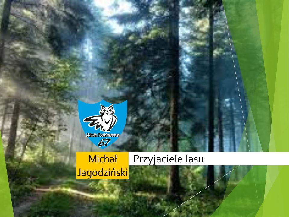 Przyjaciele lasuMichał Jagodziński