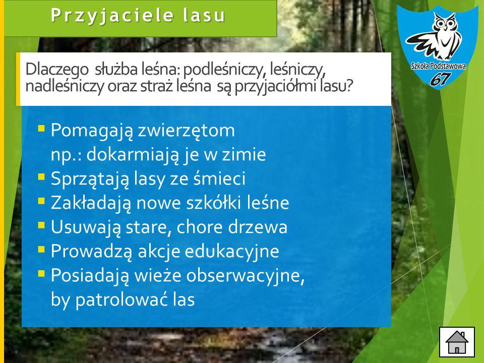 Przyjaciele lasu Dlaczego służba leśna: podleśniczy, leśniczy, nadleśniczy oraz straż leśna są przyjaciółmi lasu.