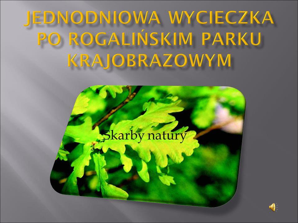  poznanie walorów przyrodniczych parku  wspieranie postaw proekologicznych,  propagowanie zasad ochrony przyrody,  prezentacja wybranego terenu,  kształcenie umiejętności pracy zespołowej