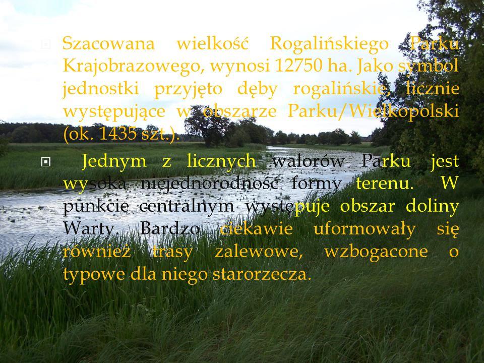 SSzacowana wielkość Rogalińskiego Parku Krajobrazowego, wynosi 12750 ha. Jako symbol jednostki przyjęto dęby rogalińskie, licznie występujące w obsz
