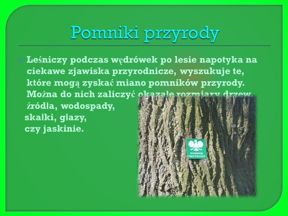  Le ś niczy podczas spacerów po lesie oznacza chore, z ł amane, spróchnia ł e drzewa, które trzeba usun ąć.