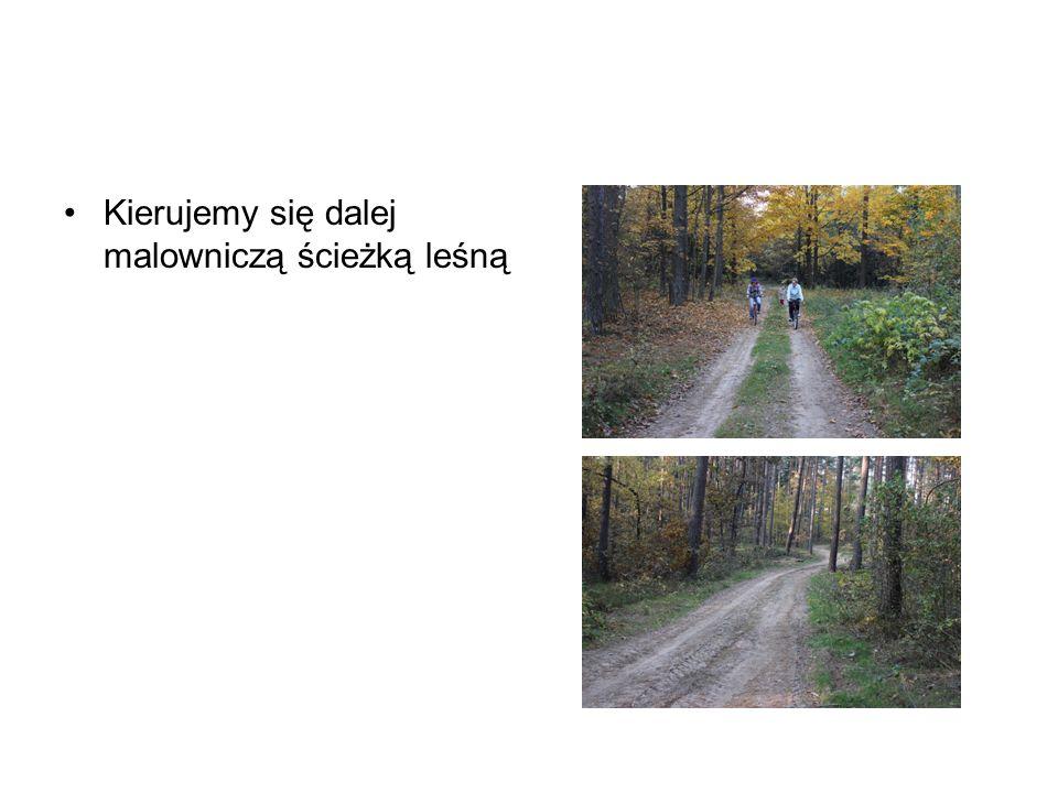Kierujemy się dalej malowniczą ścieżką leśną