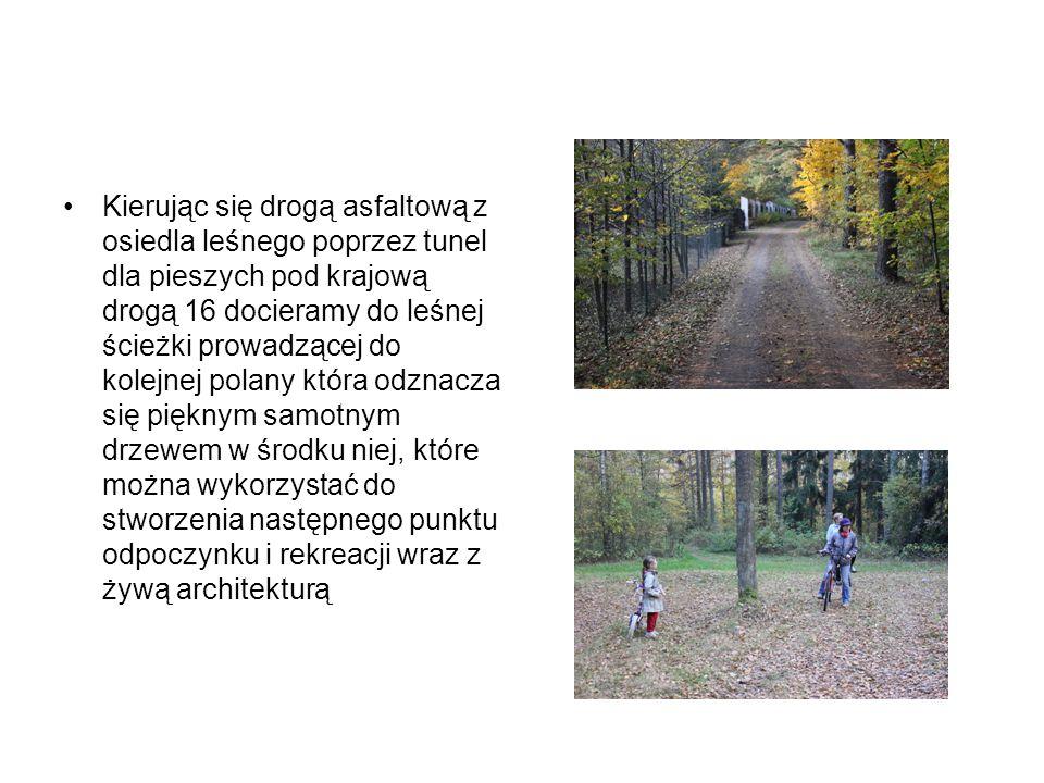 Kierując się drogą asfaltową z osiedla leśnego poprzez tunel dla pieszych pod krajową drogą 16 docieramy do leśnej ścieżki prowadzącej do kolejnej polany która odznacza się pięknym samotnym drzewem w środku niej, które można wykorzystać do stworzenia następnego punktu odpoczynku i rekreacji wraz z żywą architekturą