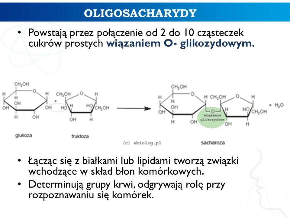 OLIGOSACHARYDY Powstają przez połączenie od 2 do 10 cząsteczek cukrów prostych wiązaniem O- glikozydowym. Łącząc się z białkami lub lipidami tworzą zw