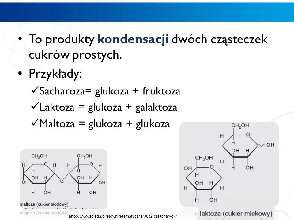 disacharydy To produkty kondensacji dwóch cząsteczek cukrów prostych. Przykłady: Sacharoza= glukoza + fruktoza Laktoza = glukoza + galaktoza Maltoza =