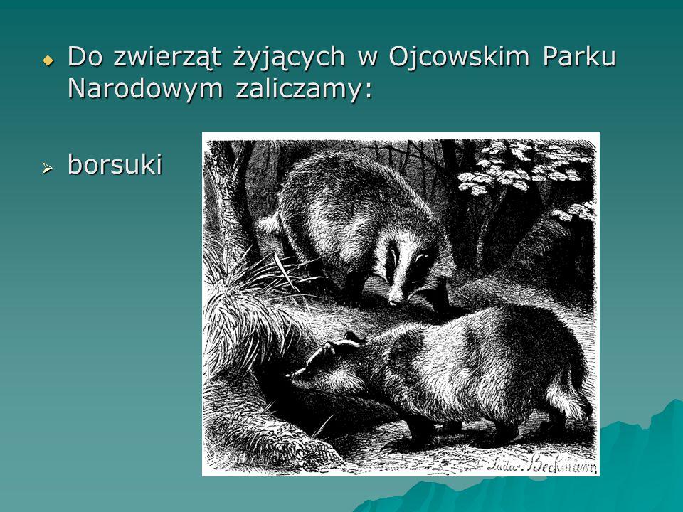  Do zwierząt żyjących w Ojcowskim Parku Narodowym zaliczamy:  borsuki