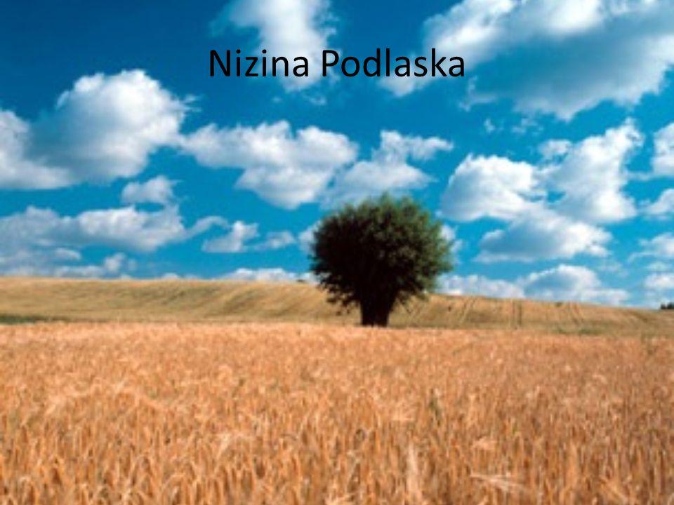 Nizina Mazowiecka