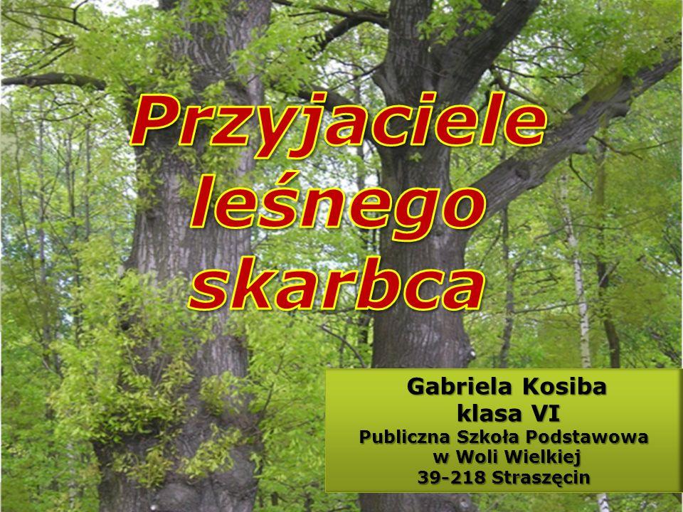 Gabriela Kosiba Gabriela Kosiba klasa VI klasa VI Publiczna Szkoła Podstawowa w Woli Wielkiej w Woli Wielkiej 39-218 Straszęcin