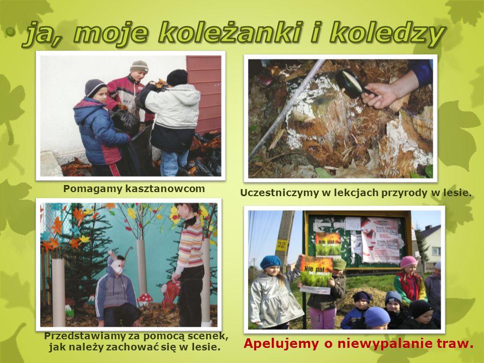 Przedstawiamy za pomocą scenek, jak należy zachować się w lesie. Uczestniczymy w lekcjach przyrody w lesie. Apelujemy o niewypalanie traw. Pomagamy ka