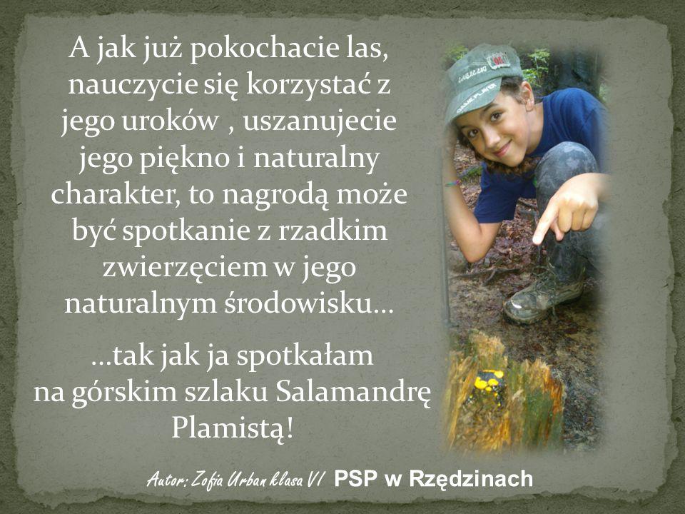 A jak już pokochacie las, nauczycie się korzystać z jego uroków, uszanujecie jego piękno i naturalny charakter, to nagrodą może być spotkanie z rzadkim zwierzęciem w jego naturalnym środowisku… …tak jak ja spotkałam na górskim szlaku Salamandrę Plamistą.