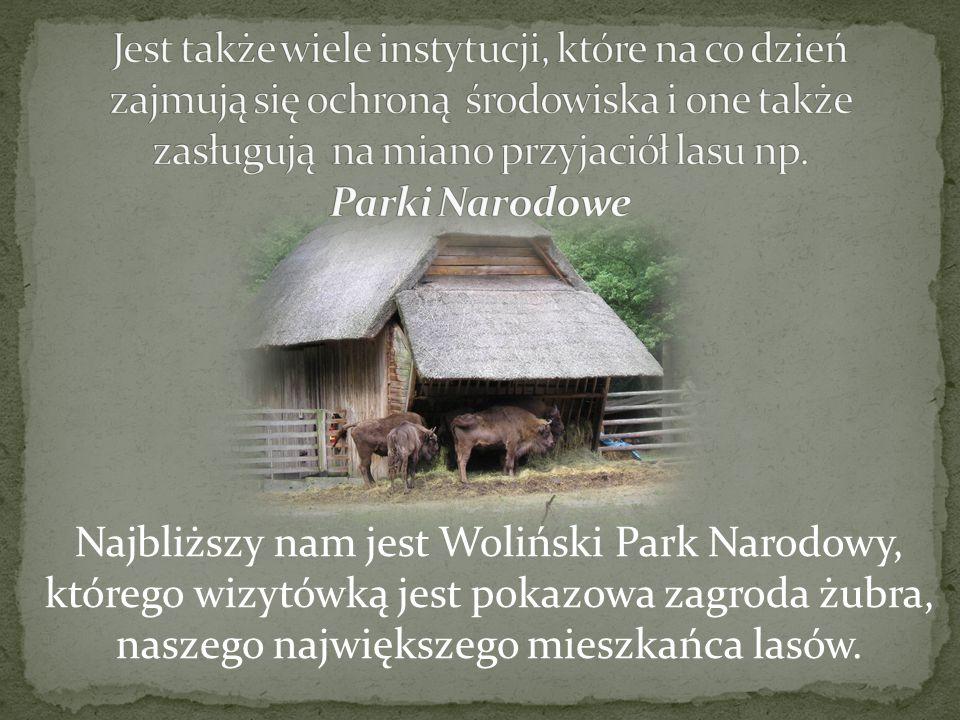Najbliższy nam jest Woliński Park Narodowy, którego wizytówką jest pokazowa zagroda żubra, naszego największego mieszkańca lasów.