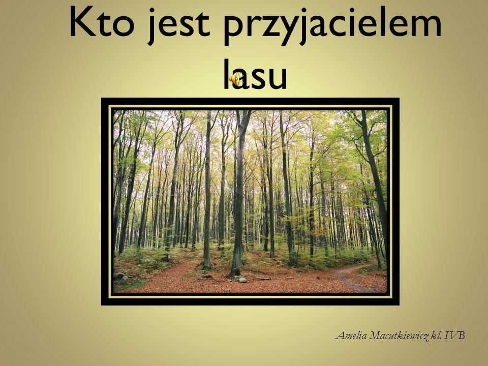 Kto jest przyjacielem lasu Amelia Macutkiewicz kl. IVB