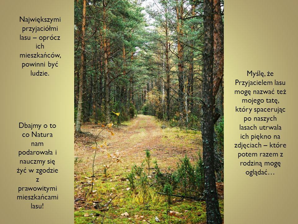 Największymi przyjaciółmi lasu – oprócz ich mieszkańców, powinni być ludzie. Dbajmy o to co Natura nam podarowała i nauczmy się żyć w zgodzie z prawow