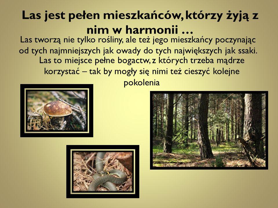 Las jest pełen mieszkańców, którzy żyją z nim w harmonii … Las tworzą nie tylko rośliny, ale też jego mieszkańcy poczynając od tych najmniejszych jak