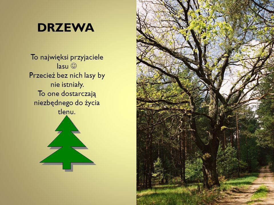 DRZEWA To najwięksi przyjaciele lasu Przecież bez nich lasy by nie istniały. To one dostarczają niezbędnego do życia tlenu.