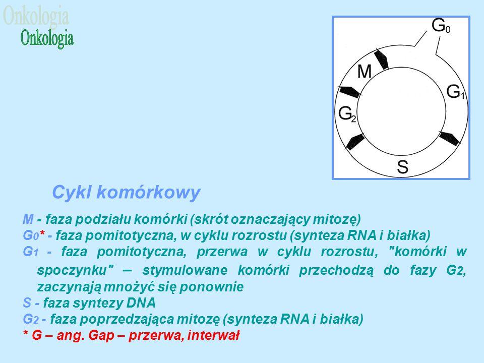 M - faza podziału komórki (skrót oznaczający mitozę) G 0 * - faza pomitotyczna, w cyklu rozrostu (synteza RNA i białka) G 1 - faza pomitotyczna, przerwa w cyklu rozrostu, komórki w spoczynku – stymulowane komórki przechodzą do fazy G 2, zaczynają mnożyć się ponownie S - faza syntezy DNA G 2 - faza poprzedzająca mitozę (synteza RNA i białka) * G – ang.