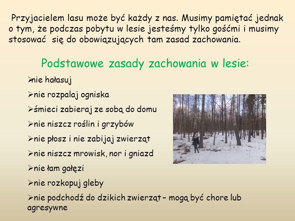 Przyjacielem lasu może być każdy z nas. Musimy pamiętać jednak o tym, że podczas pobytu w lesie jesteśmy tylko gośćmi i musimy stosować się do obowiąz